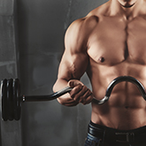 Gelenke / Muskeln